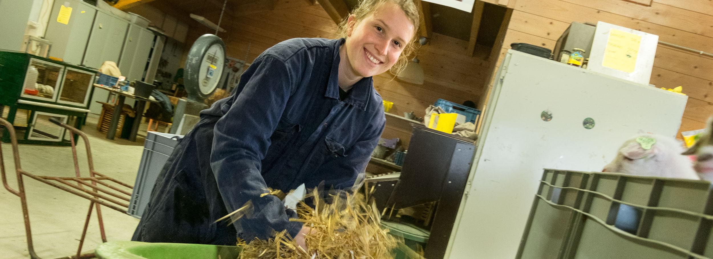 stro wordt opgeschud om een lekker nestje te maken voor de lammeren