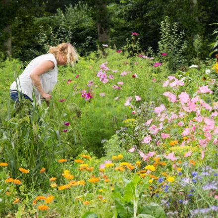 Kleur-bloemen-plukken-weelde